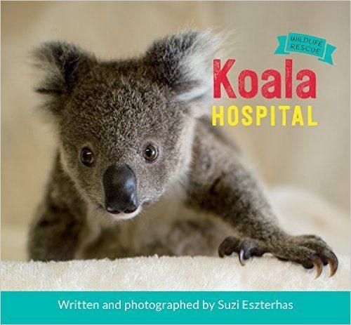 Koala Hospital (Wildlife Rescue)